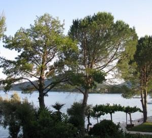 Havupuut välimeren rannalla
